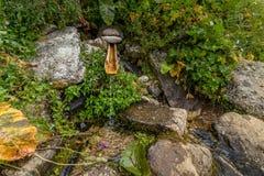 Houten fontein op berg Kackarlar in Turkije, Rize Stock Afbeelding