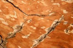 Houten fossielentextuur met glanzende en marmeren texturen met bruine kleur en barst rond - foto royalty-vrije stock afbeeldingen