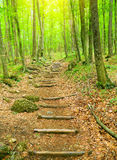Houten gang in het bos. royalty-vrije stock fotografie
