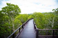 Houten gangbrug in het Mangrovebos Stock Foto