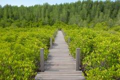 Houten gangbrug op het gebied van Ceriops Tagal in mangrovebos Royalty-vrije Stock Afbeelding