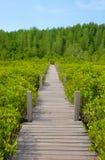 Houten gangbrug op het gebied van Ceriops Tagal in mangrovebos Stock Foto's
