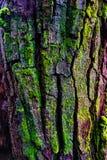 Houten geweven met groen mos Stock Foto