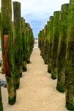 Houten golfbreker ons strand van Wissant, kooi opale, Frankrijk Stock Afbeeldingen