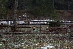 Houten haag dichtbij bergen bosrivier royalty-vrije stock foto's