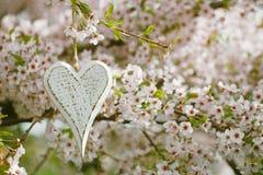 Houten hart in de Lente met bloesem royalty-vrije stock fotografie