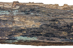 Houten houtbederf dat op witte achtergrond wordt geïsoleerd Royalty-vrije Stock Foto