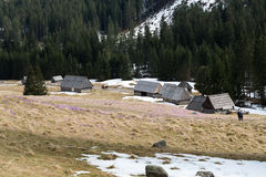 Houten hutten in Chocholowska-vallei in de lente, Tatra-Bergen, stock foto's