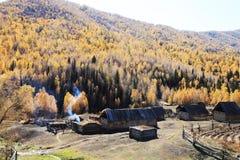 Houten hutten door gele bomen Royalty-vrije Stock Fotografie