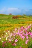 Houten kar in de tuin van Boon Rawd Farm Royalty-vrije Stock Fotografie