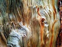 Houten korrel op pijnboom stock foto
