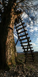 Houten ladder Stock Afbeeldingen