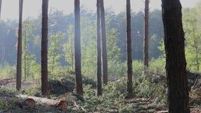 Houten lading in het vrachtwagenlichaam, hout het oogsten, houten knipsel stock videobeelden
