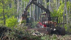 Houten lading in het vrachtwagenlichaam, hout het oogsten, houten knipsel stock video