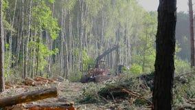 Houten lading in het vrachtwagenlichaam, hout het oogsten, houten knipsel stock footage