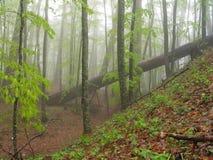 Houten landschap in bergen. royalty-vrije stock afbeeldingen