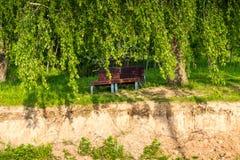 Houten lanterfanters onder een schaduwrijke boom in het park Royalty-vrije Stock Fotografie