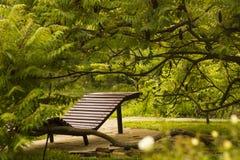 Houten ligstoel op terras onder boom Royalty-vrije Stock Foto's