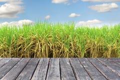 Houten lijst aangaande Prepare Suikerrietgebied royalty-vrije stock afbeelding