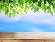 Houten lijst met blauwe hemel en groene bladerenachtergrond Stock Fotografie