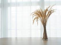 Houten lijst met droge rijstboom op glazenpot op wit gordijn Royalty-vrije Stock Afbeeldingen