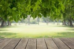 Houten lijstperspectief met groen boomontwerp voor spot omhoog en achtergrond Stock Foto
