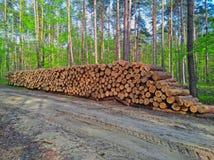 Houten logboeken van pijnboomhout in het bos Stock Afbeelding