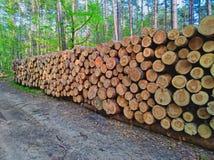 Houten logboeken van pijnboomhout in het bos royalty-vrije stock foto