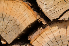 Houten logboekenclose-up stock fotografie