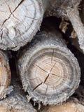 Houten logboekendetail, ringen en barsten stock foto
