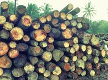 Houten logboekenpijnboom Royalty-vrije Stock Afbeeldingen