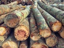 Houten logboekenpijnboom Stock Afbeeldingen
