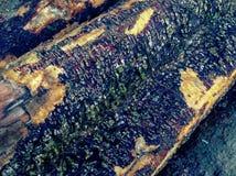 Houten logboekenpijnboom Stock Foto's