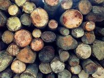 Houten logboekenpijnboom Stock Fotografie