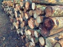 Houten logboekenpijnboom Royalty-vrije Stock Foto