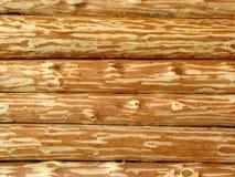 Houten logboekmuur Stock Foto