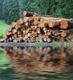 Houten logboekopslag in bos stock afbeeldingen
