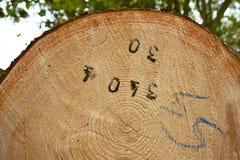 Houten login bos Royalty-vrije Stock Foto's