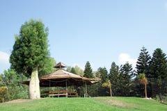 houten loods, bomen Royalty-vrije Stock Afbeelding