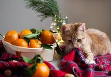 Houten Mandmandarine met Bladeren en Lichten, Mandarijnsinaasappel op Gray Table Background Christmas New-Jaardecors royalty-vrije stock fotografie