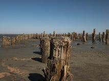 Houten meerpalen in het zand tegen het estuarium en de blauwe hemel kuyalnitsky estuarium stock afbeeldingen