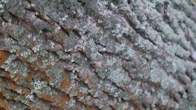 Houten micro- close-up royalty-vrije stock foto's