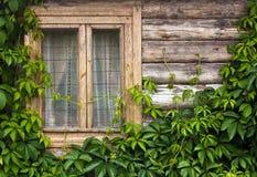 Houten muur met installaties en venster Royalty-vrije Stock Afbeelding