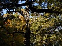 houten nestkastjes in de herfst stock foto's