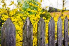 Houten omheining en gele vage bloemen op zonnige dag stock afbeeldingen