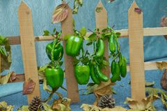 Houten omheining Kunstmatige peper en komkommers Kunstmatige vruchten en groenten op een blauwe achtergrond royalty-vrije stock foto