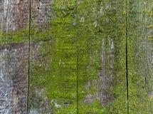 Houten omheining met groen mos royalty-vrije stock afbeelding