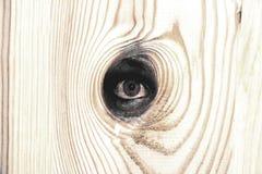 Houten oog Stock Foto's