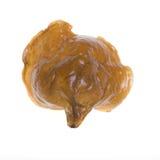 Houten oorpaddestoel Royalty-vrije Stock Foto