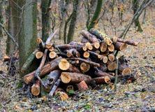 Houten opent bos het programma stock fotografie